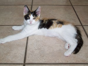 Patches, family cat